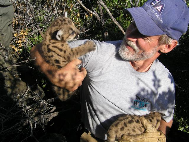 Winston Vickers with mountain lion cubs
