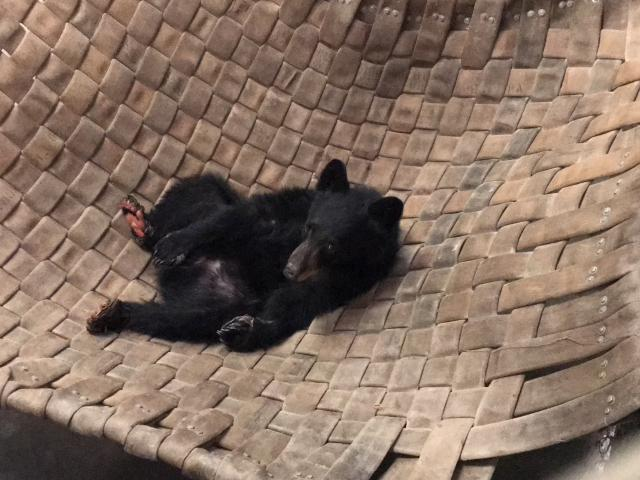 burned bear in hammock